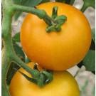 Tangerine F1