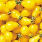 Yellow Pear